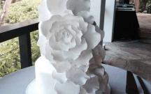 Garden Rose Petal